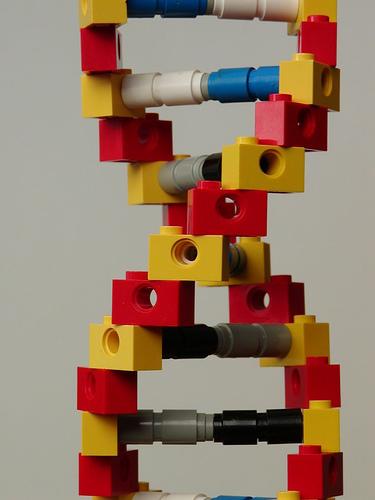 Baukasten DNA