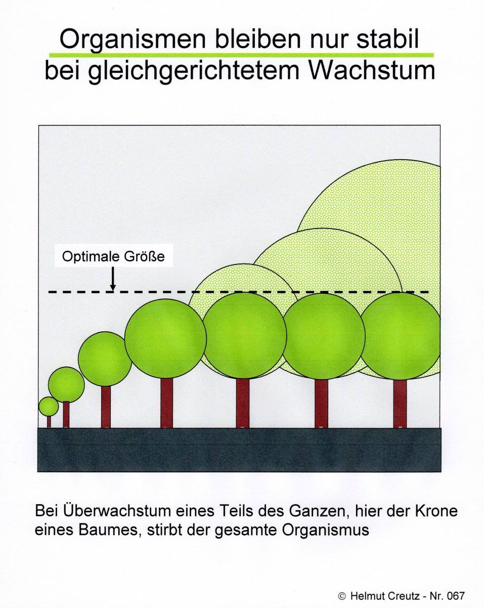 Organismen bleiben nur stabil Helmut Creutz Nr 067